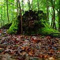 Die Natur.jpg