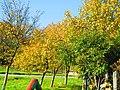 Dioșod 457168, Romania - panoramio (137).jpg