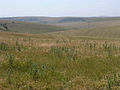 Dip slope of the South Downs escarpment - geograph.org.uk - 30794.jpg