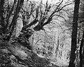 Dirfi, forest.jpg