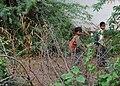 Ditala - Gujarat, India (5933429593).jpg