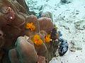 Diving Ko Tao, Thailand 1003.jpg