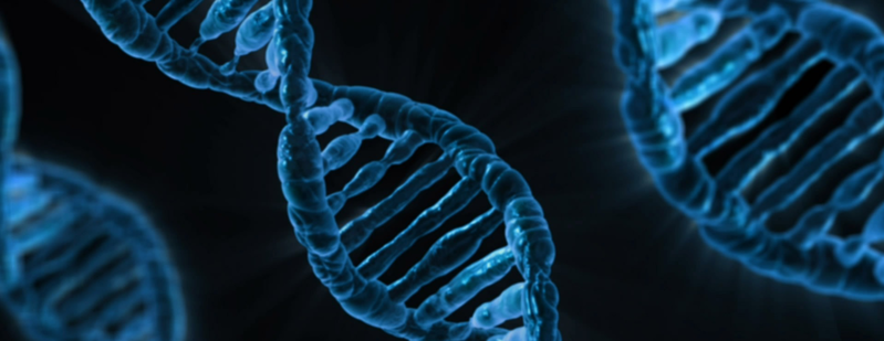 File:Dna-163466 (crop).png