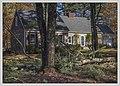 Downed Tree (26399762799).jpg