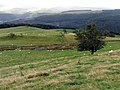 Downhill towards Coedydd Branas - geograph.org.uk - 566374.jpg