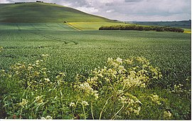 Downland West of Milk Hill. - geograph.org.uk - 185577.jpg