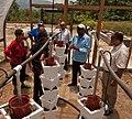 Drip Irrigation (5683731277).jpg