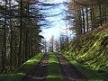 Dundoran Plantation - geograph.org.uk - 353819.jpg