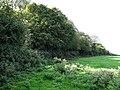 Dunton Spinney - geograph.org.uk - 235242.jpg