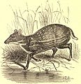 EB1911 Chevrotain.jpg