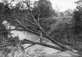 ETH-BIB-Auf einem Baum, der umgeknickt im Fluss liegt, steht ein Mann-Kilimanjaroflug 1929-30-LBS MH02-07-0259.tif