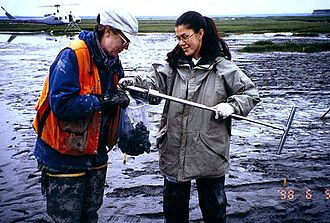 Cold Regions Research and Engineering Laboratory - Sampling mud sediments for contaminants that were causing waterfowl deaths at Eagle River Flats, near Anchorage, Alaska.