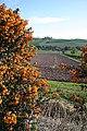 Easter Kinsleith - geograph.org.uk - 405033.jpg