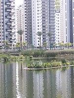 Ecological Lake, Petah Tikva 4.jpg