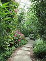 Edvard Andersons växthus-IMG 1620.jpg