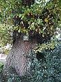 Eiche Naturdenkmal I.A.3 Schilder 1.jpg