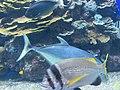 Eilat Coral World Underwater Observatory 28.jpg