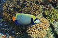 Eilat UnderwaterObservatoryCorals 9883.JPG
