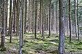 Ein mit Bäumen gefüllter Wald - panoramio.jpg
