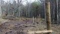 Electric Fence (Glen Lui) on Mar Lodge Estate (15MAR13) (27).jpg