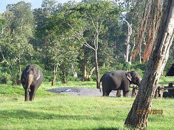 Elephants in mudumalai national park and wild life sanctuary.jpg