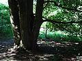 Eltenberg PM15-09.jpg