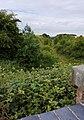 Enthorpe railway line - geograph.org.uk - 1386866.jpg