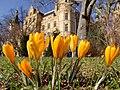 Es wird Frühling im Burggarten.jpg