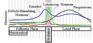 Progesterone levels (black line) during the me...