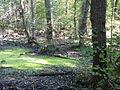 FFM Stadtwald Rohsee Nordteil 2.jpg