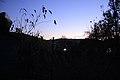 FOREST TWILIGHTING (2011-11-07 18-33) - panoramio.jpg