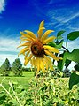 Fading Summer (2) (15243175532).jpg