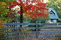 Fall Colors at Duke Farms, Hillsborough.jpg