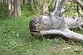 Fallen tree become monster (Ehrwald, Hochthörl Weg) (24567235162).jpg