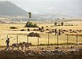Farmland In Late Afternoon, Axum, Ethiopia (3160475242).jpg