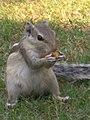 Feeding squirel.jpg
