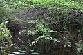 Fern Forest - panoramio.jpg