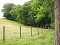 Field boundary - geograph.org.uk - 574966.jpg
