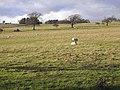 Field near Houtley Farm - geograph.org.uk - 1135709.jpg