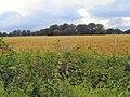 Field near Twemlow Green - geograph.org.uk - 493135.jpg