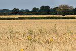 Fields - RAF Mildenhall (14569574317).jpg