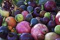 Figues Grenades CL JWeber (2) (23675354745).jpg