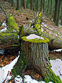 Flickr - Nicholas T - Stumped.jpg