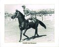 Flight 1944 AJC Australia Day Handicap Randwick Racecourse Jockey Jack Thompson Trainer Frank Nowland.jpg