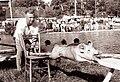 Flosarski bal na Ljubnem 1961 (14).jpg