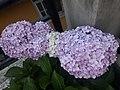 Flower20180527 184555.jpg