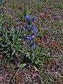 Flowers, IJmuiden - panoramio (1).jpg