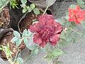 Flowers (25).JPG