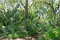 Foliage - Bok Tower Gardens - DSC02101.jpg