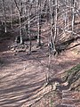 Font Bona, Montseny (febrer 2011) - panoramio.jpg